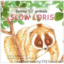 Borneo Animals -  Slow Loris