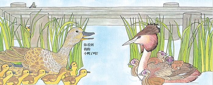 你看到我的小鸭了吗?