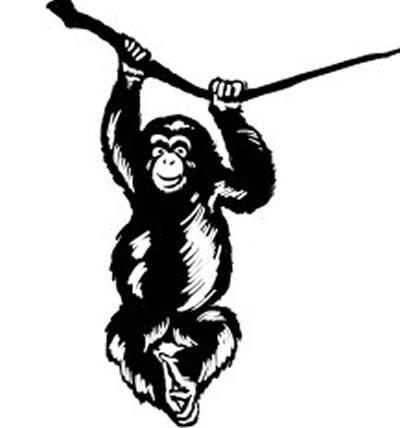 和导盲猩猩一起历险
