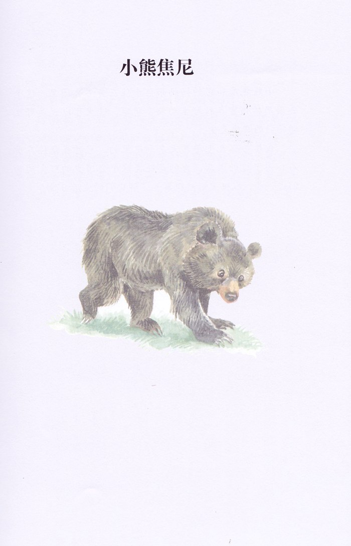 西顿动物小说全集 14.小熊焦尼(彩绘版)